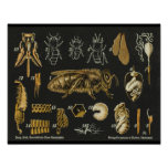 Honey Bee Anatomy Insect Vintage Poster