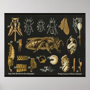 Vintage Bee Posters Photo Prints Zazzle