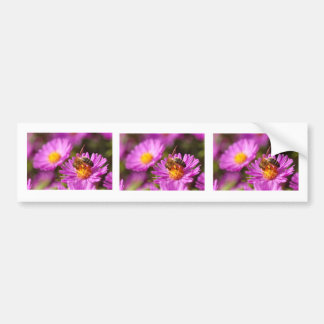 Honey bee and pollination car bumper sticker
