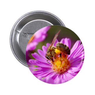 Honey bee and pollination button