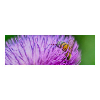 Honey Bee and Texas Thistle Poster