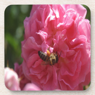 Honey Bee Collecting Pollen On A Pink Rose Beverage Coaster