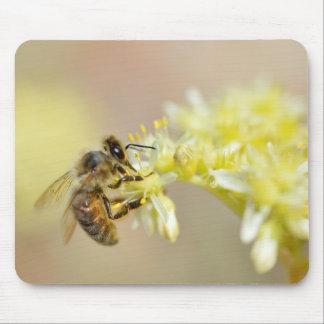 Honey bee feeding on flower mouse pad