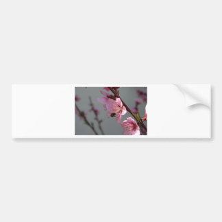 Honey Bee Feeding on Peach Tree Blossom Bumper Sticker
