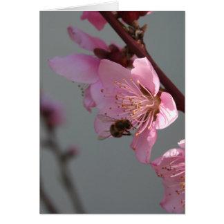 Honey Bee Feeding on Peach Tree Blossom Greeting Card