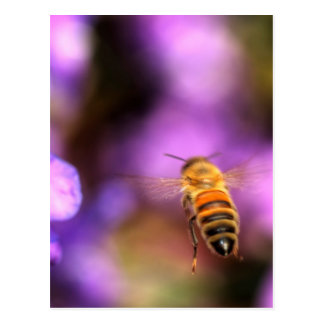 Honey Bee Flying Toward Flower Postcard