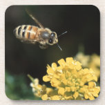 honey bee in flight beverage coasters