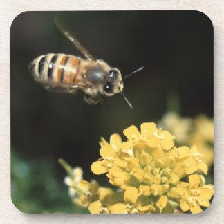 honey bee in flight drink coasters