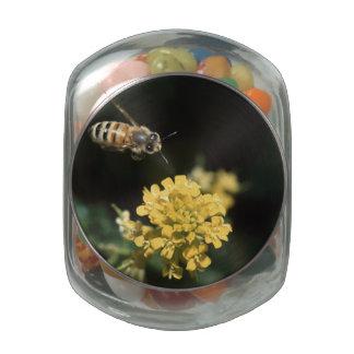 honey bee in flight jelly belly candy jar