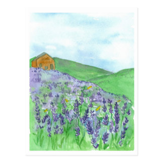 Honey Bee Lavender Field Cottage Postcard