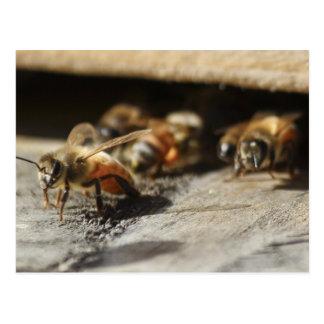 Honey bee leaving hive postcard