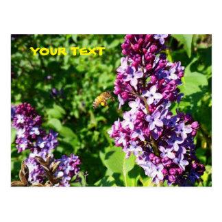 Honey Bee Loves Lilacs Postcard