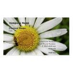 Honey Bee on a Daisy Business Card Templates
