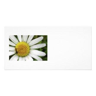 Honey Bee on a Daisy Photo Card Template