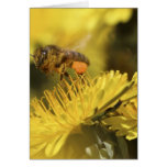 Honey Bee on a flower Greeting Card