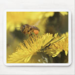 Honey Bee on a flower Mouse Pad