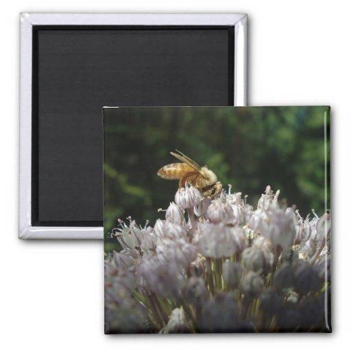 Honey bee on allium - Magnet