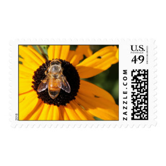 Honey Bee on Black Eyed Susan Stamp 2