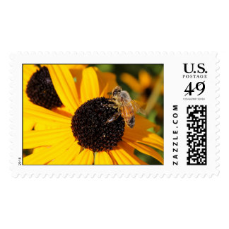 Honey Bee on Black Eyed Susan Stamp 4