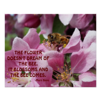Honey Bee on Blossom with Quote Poster