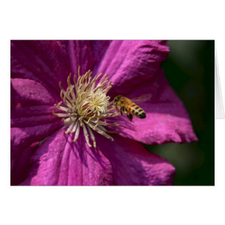 Honey bee on Clematis flower Greeting Card