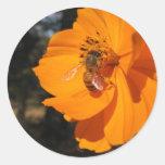 Honey Bee on Cosmos Round Sticker