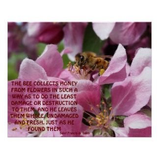 Honey Bee on Crabapple Blossom with Quote Poster