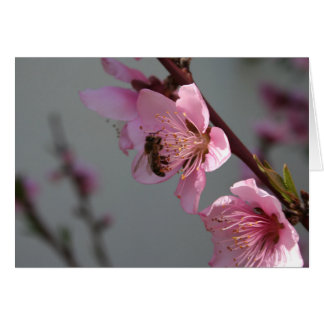 Honey Bee On Open Peach Tree Blossom Greeting Card