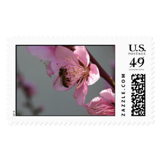Honey Bee On Open Peach Tree Blossom Postage