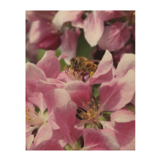 Honey Bee on Pink Crabapple Blossom by djoneill Wood Wall Decor