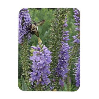 Honey Bee on Purple Flower 2 Magnet