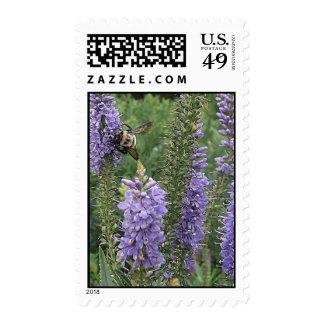 Honey Bee on Purple Flower 2 Postage Stamp