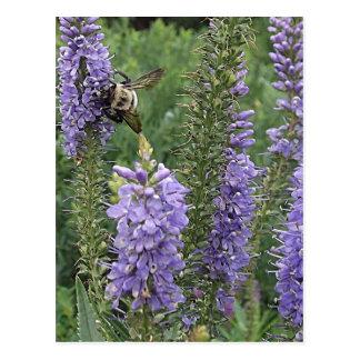 Honey Bee on Purple Flower 2 Postcard