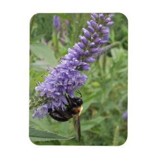 Honey Bee on Purple Flower Magnet