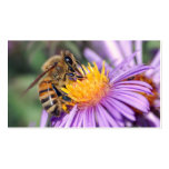 Honey Bee on Purple Pink Flower Business Card Template