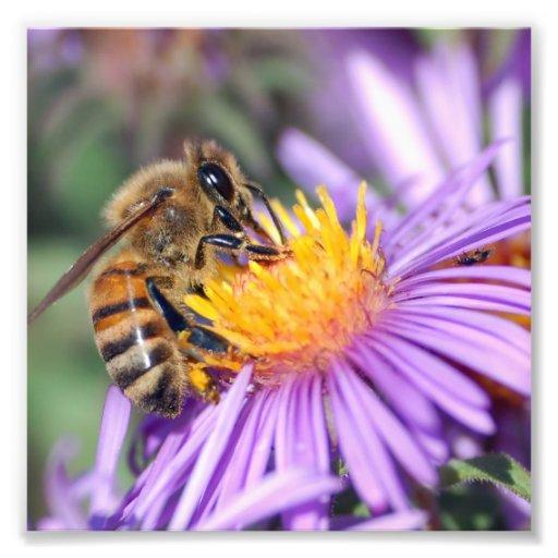 Honey Bee on Purple Pink Flower Photograph