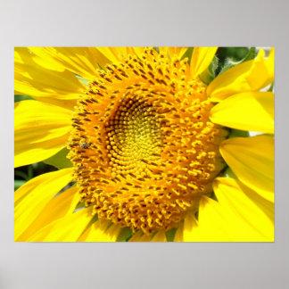 Honey Bee on Sunflower Print