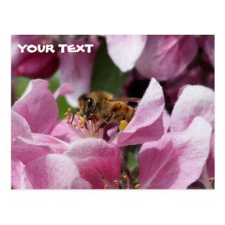 Honey Bee Pollinating Pink Crabapple Tree Blossom Postcard