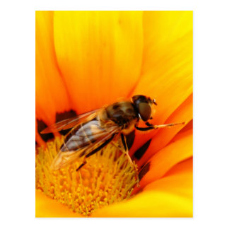 Honey Bee Postcard