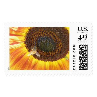 Honey Bee & Sunflower Postage Stamps