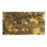 Honey Bees everywhere Postcard