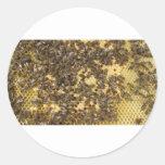 Honey Bees everywhere Stickers