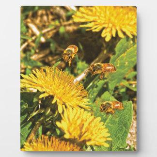 Honey Bees Flying Around Dandelions Plaque