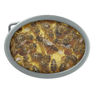 Honey Bees in Hive with Queen in Middle Belt Buckle