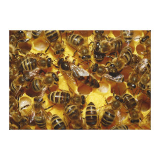 Honey Bees in Hive with Queen in Middle Canvas Print