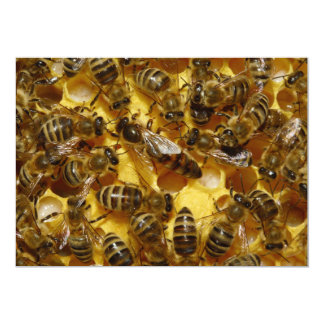 Honey Bees in Hive with Queen in Middle Card