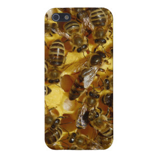 Honey Bees in Hive with Queen in Middle Covers For iPhone 5