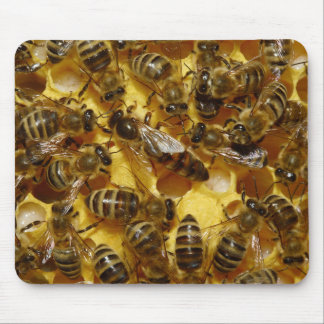 Honey Bees in Hive with Queen in Middle Mouse Pad