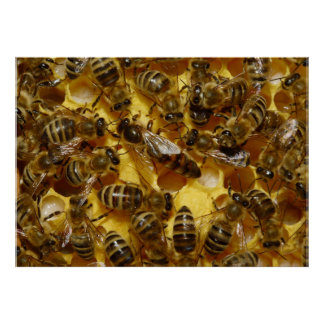 Honey Bees in Hive with Queen in Middle Poster