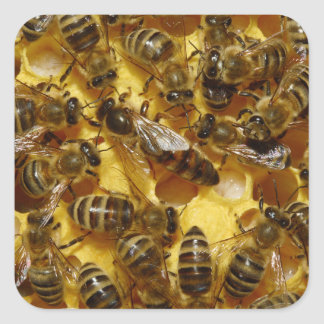 Honey Bees in Hive with Queen in Middle Stickers